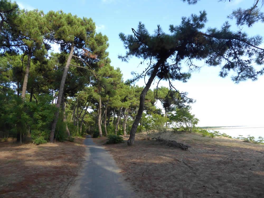 piste cyclable la palmyre