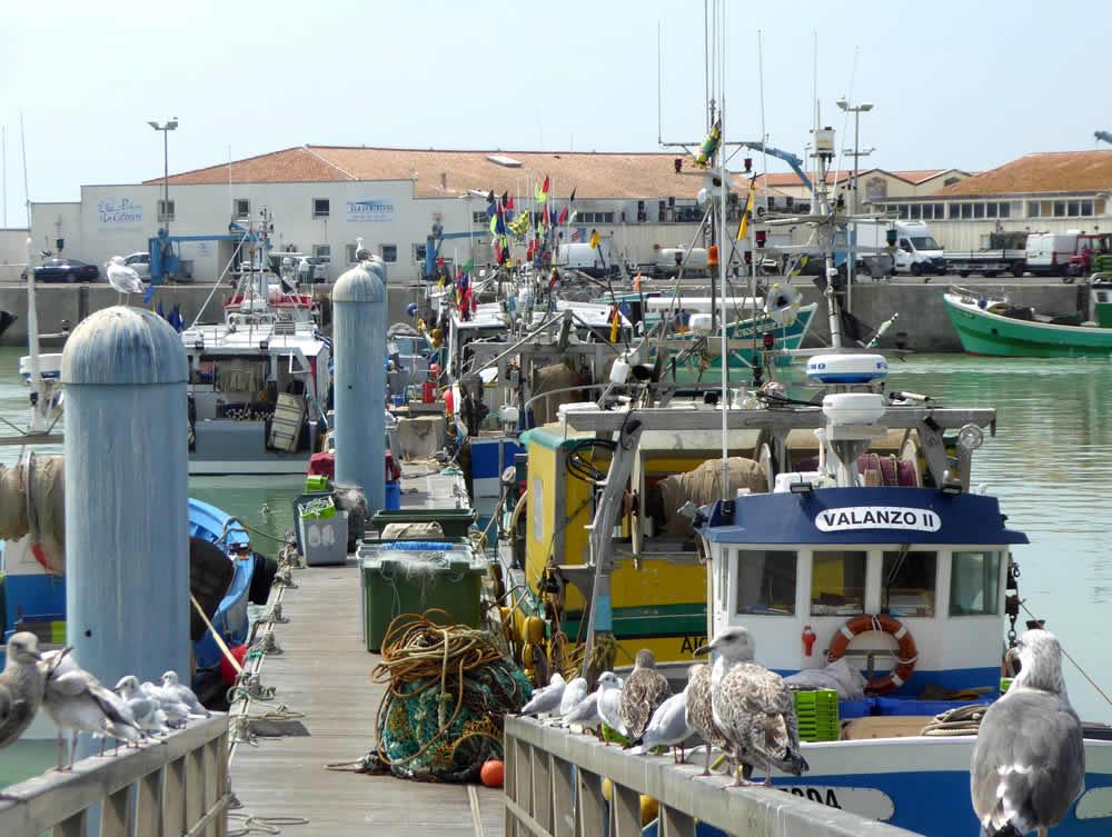 port de la cotinière